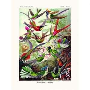 Vintage Poster Kolibries Bij de Tijd: vintage & designmeubelen