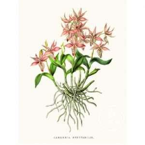 Vintage Poster Orchidee Bij de Tijd: vintage & designmeubelen