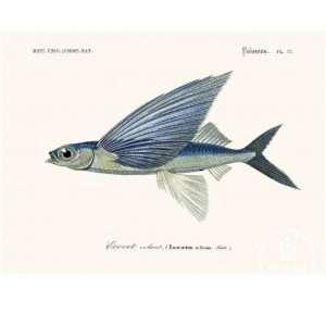 Vinage Poster vliegende vissen (Exocoetidae) Bij de Tijd: vintage & designmeubelen