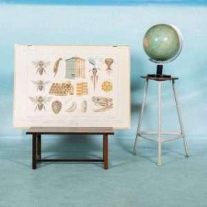 Vintage schoolplaat 'op de heide' insecten Wolters poster Bij de Tijd: vintage & designmeubelen